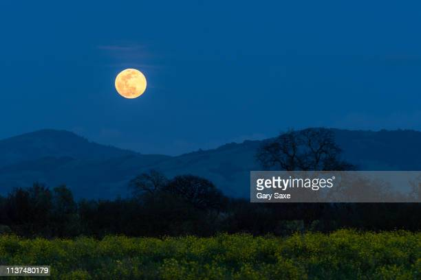 rising full moon on the first day of spring with mustard plant in bloom and oak trees, sonoma county, california. - flower moon stock pictures, royalty-free photos & images
