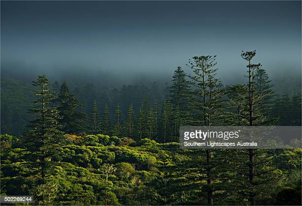 rising mist in the rainforest of the national park on norfolk island. - foresta temperata foto e immagini stock