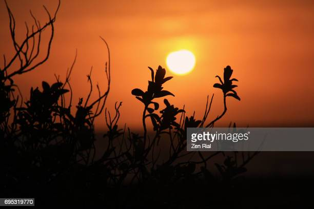 Rising Sun behind plant silhouettes in Florida, USA