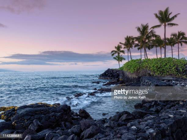 a rising sun illuminates a lava strewn shoreline on the kona coast of the island of hawaii as palm tree sway in the wind. - kailua stock pictures, royalty-free photos & images