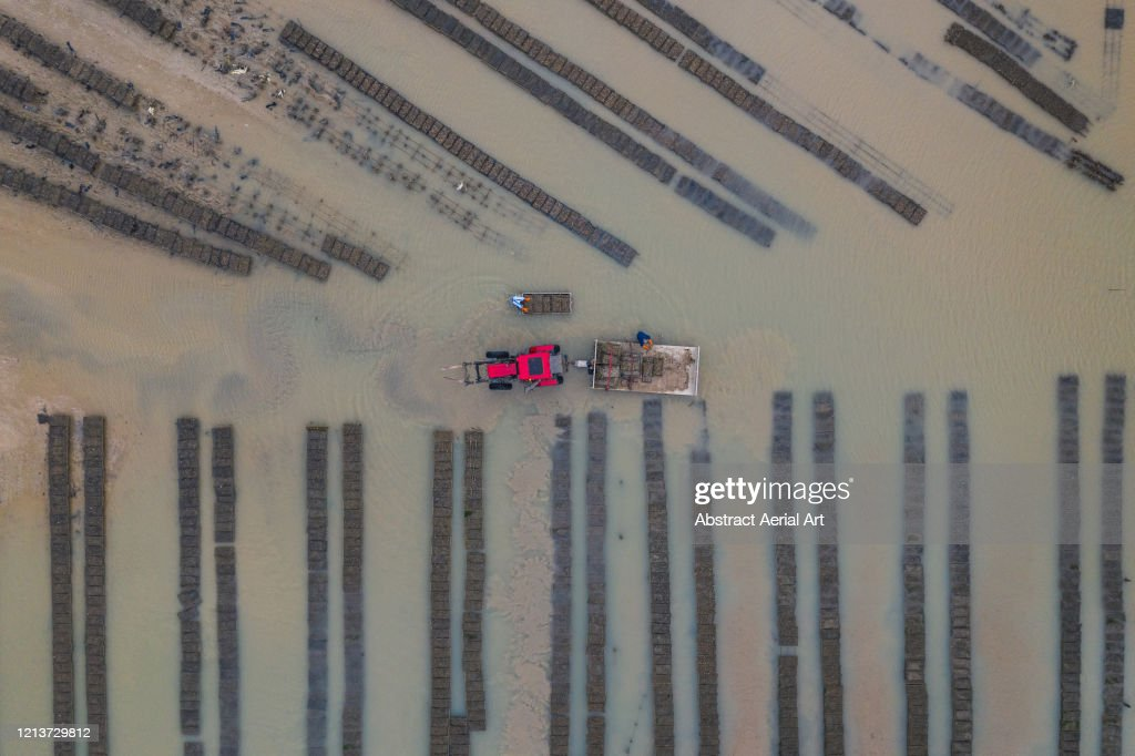 Rising tide in an oyster farm seen from above, Fouras, France : Stock Photo
