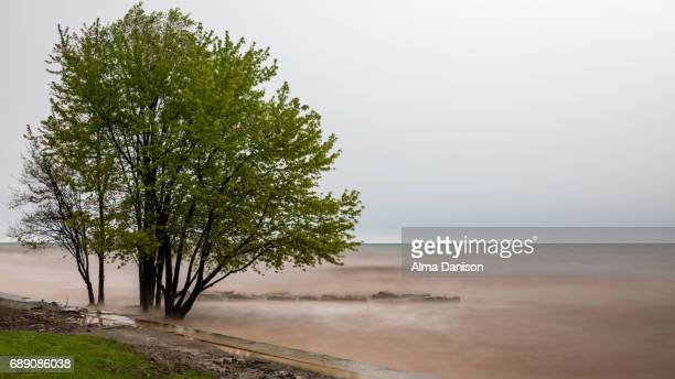rising water level on lake ontario - alma danison stock photos and pictures