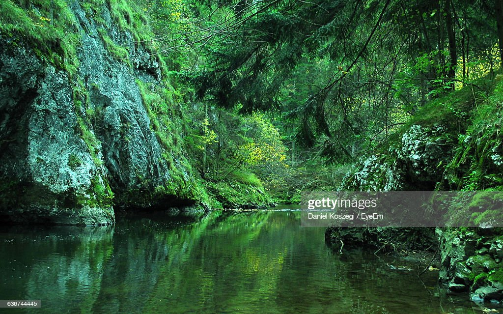 River Amidst Mountains In Forest : Stock Photo