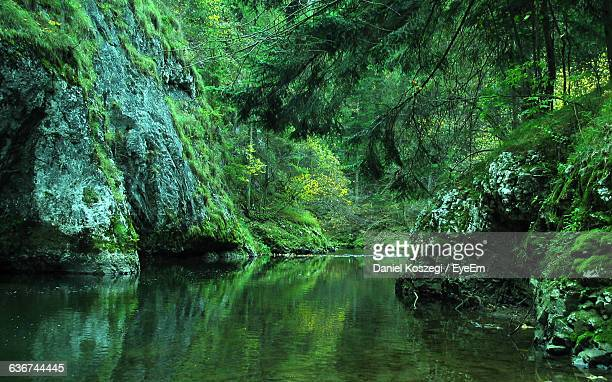 River Amidst Mountains In Forest
