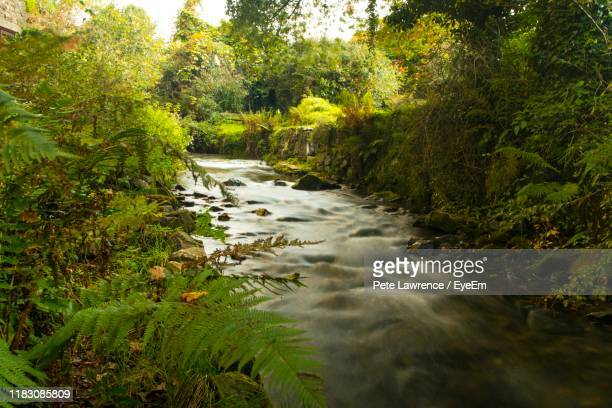 river amidst trees and plants in forest - 2017 stock pictures, royalty-free photos & images