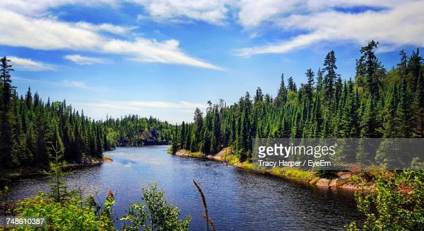 river amidst trees in forest against sky - kenora stock pictures, royalty-free photos & images