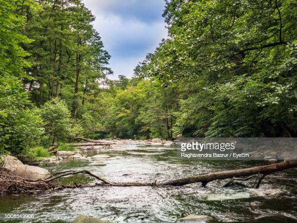river amidst trees in forest - thuringia stock pictures, royalty-free photos & images