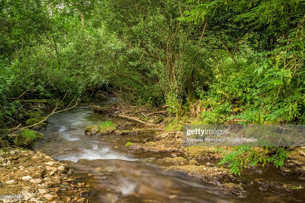 River Amidst Trees In Forest : Stock Photo