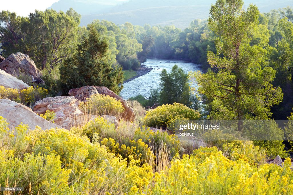 River and backlit yellow flowers in colorado stock photo getty images river and backlit yellow flowers in colorado stock photo mightylinksfo