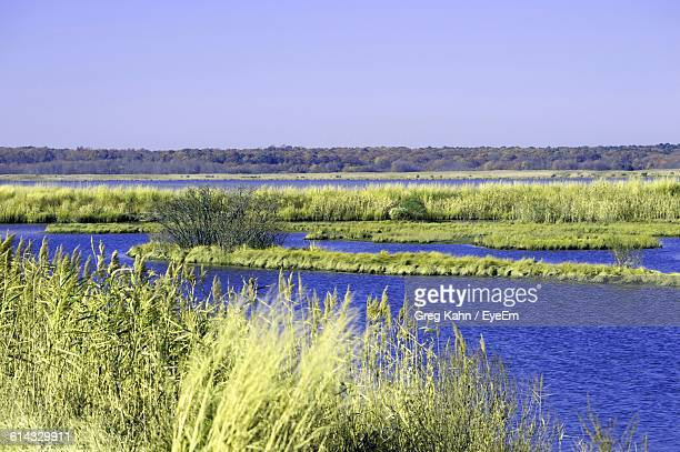 river and plants against clear sky on sunny day - kahn stock-fotos und bilder