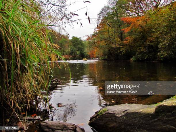 River and trees in autumn