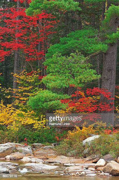 , river and trees in autumn , white mountain national forest , new hampshire , - white river national forest stock photos and pictures