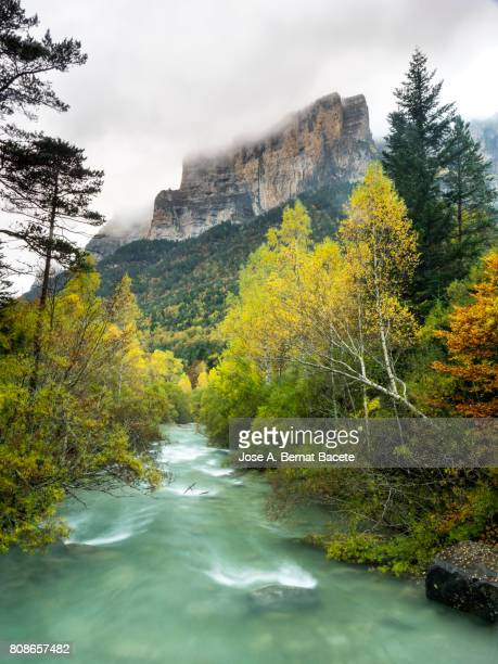 river at high mountain crossing a valley with forest of trees in autumn, a rainy day and fog. ordesa national park, huesca spain. - aragon fotografías e imágenes de stock