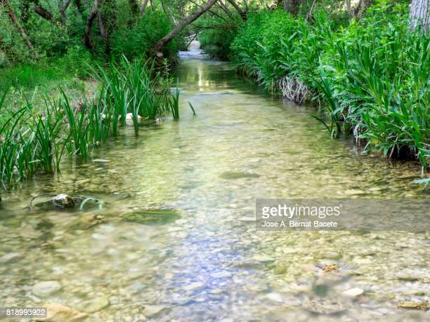 River at mountain of clean and transparent waters  that passes slowly for a zone of green grass in his shores. Valencian Community, Spain.
