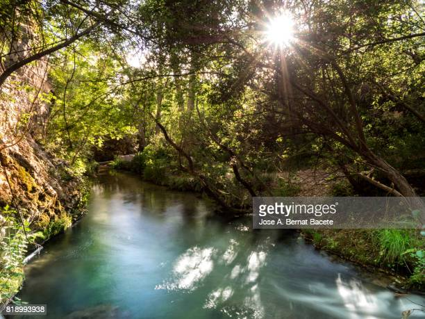 River at mountain of clean waters that crosses a zone of forest covered of vegetation and with the Sun between the branches in the shape of star. Valencian Community, Spain.