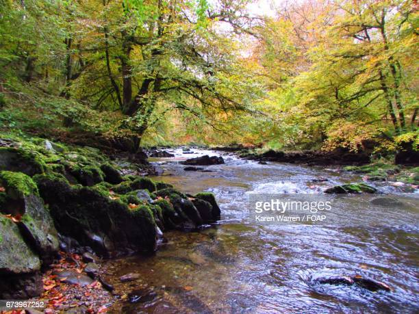 River barle flowing through forest