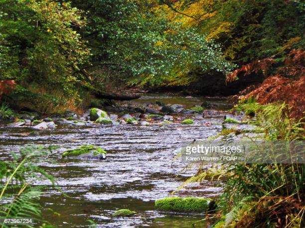 River barle in england