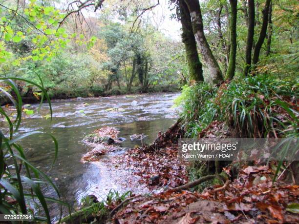 River barle the in autumn