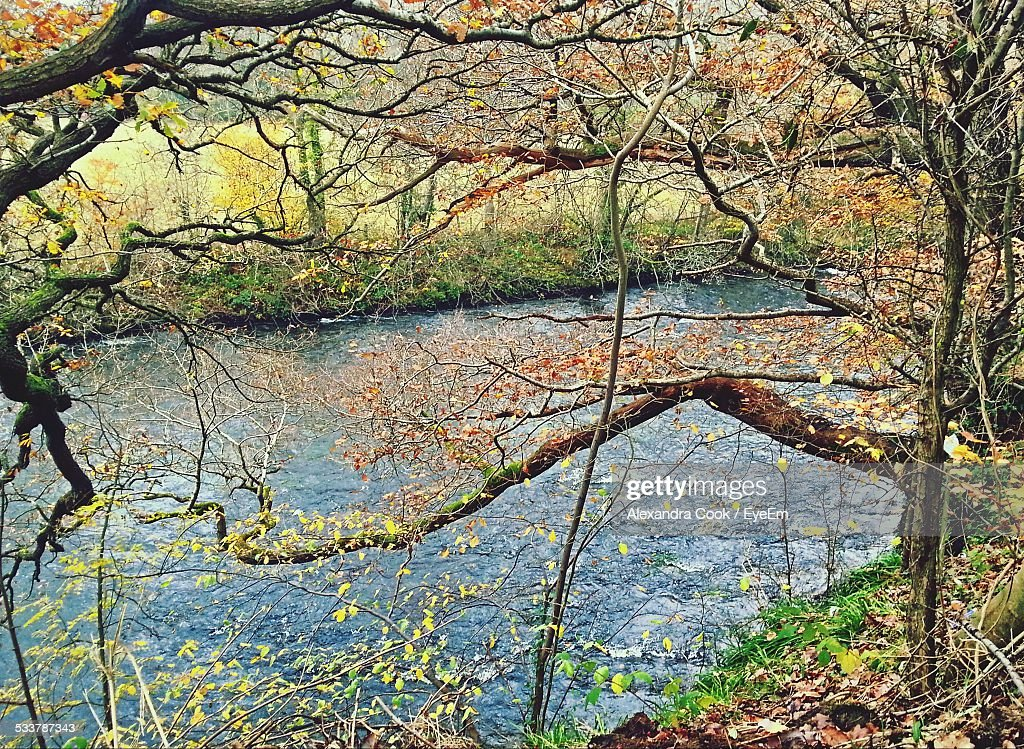 River Behind Trees : Foto stock
