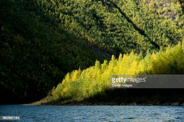 river by tree mountain at yukon_charley rivers national preserve - charley green stock pictures, royalty-free photos & images