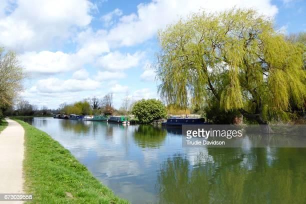 river cam - cambridge cambridgeshire imagens e fotografias de stock
