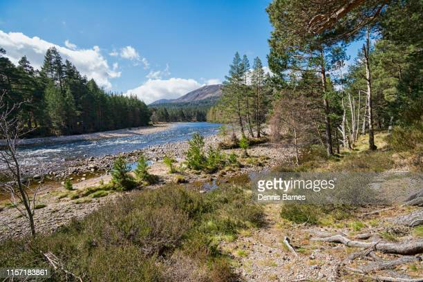 river dee near braemar, spring sunlight, aberdeenshire, scotland, uk - balmoral castle stock pictures, royalty-free photos & images