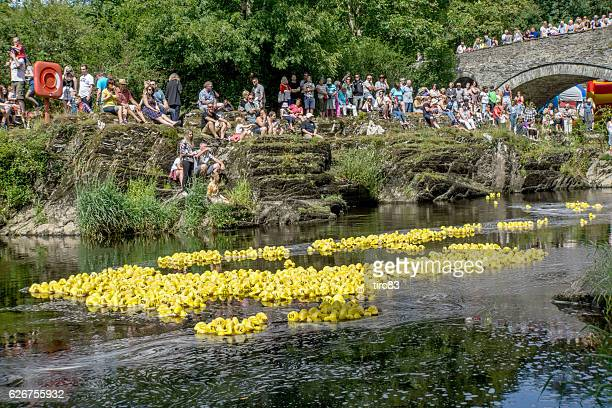 river duck race with crowds cheering them on - fete stock photos and pictures