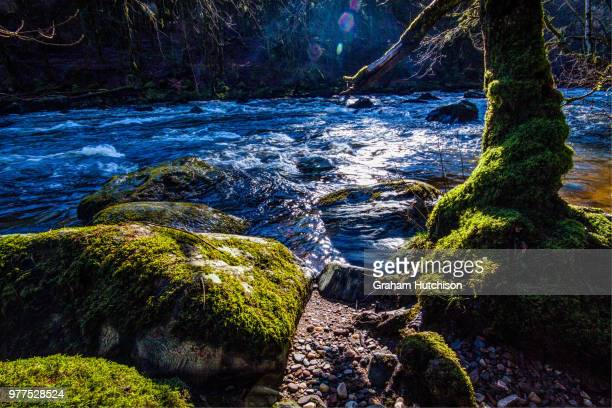 River flowing amidst moss-covered rocks, Scotland