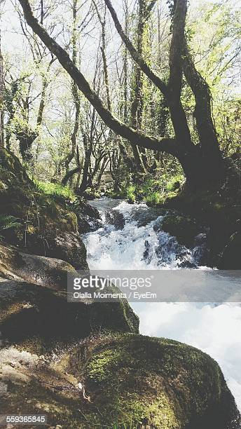 River Flowing By Rocks In Forest