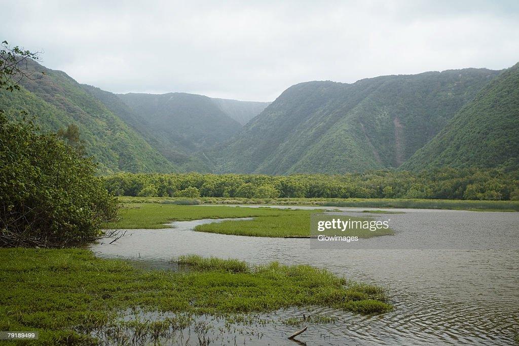 River flowing in a valley, Pololu Valley, Kohala, Big Island, Hawaii Islands, USA : Foto de stock