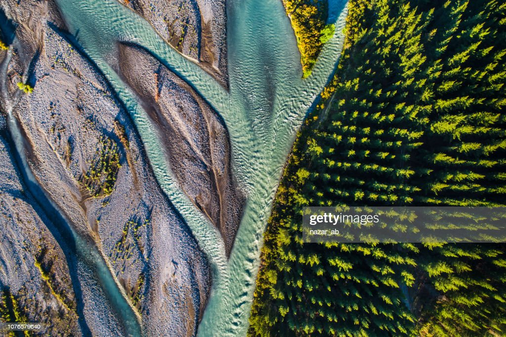 River flowing next to Pine forest. : Stock Photo