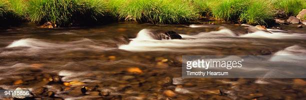 river flowing over rocks with grassy bank - timothy hearsum stock photos and pictures