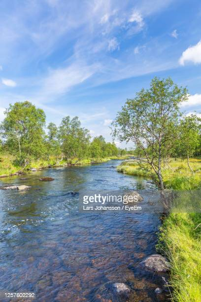 river flowing through a beautiful forest landscape - riverbank stock pictures, royalty-free photos & images