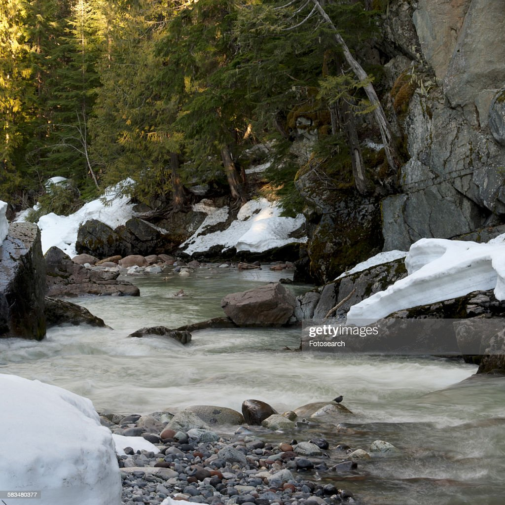 River flowing through a forest : Stock Photo