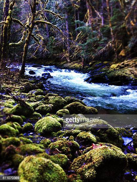 river flowing through forest - katie moss stock pictures, royalty-free photos & images