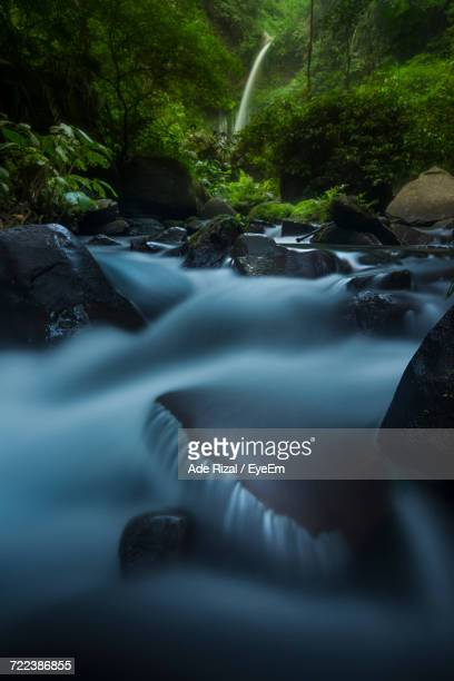 river flowing through forest - ade rizal stock photos and pictures