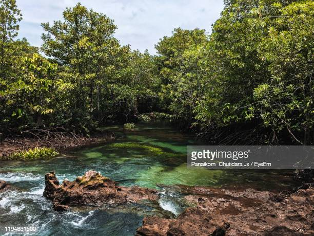 river flowing through rocks in forest - panaikorn chutidaralux stock photos and pictures