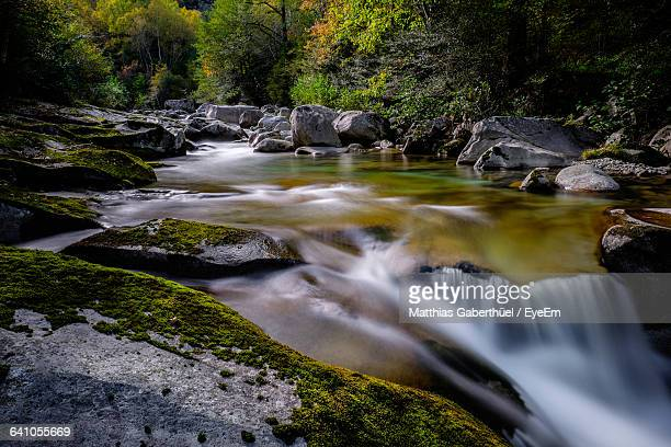 river flowing through rocks in forest - matthias gaberthüel stock pictures, royalty-free photos & images
