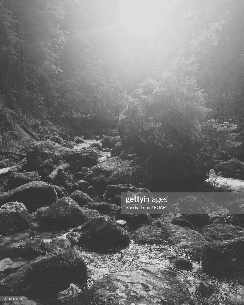 River flowing through rocks in forest : Stock Photo