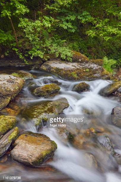a river flows through ancient woodland; the east lyn river, at watersmeet, exmoor national park, devon, great britain - exmoor national park 個照片及圖片檔
