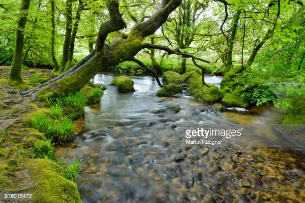 River Fowey at Golitha Falls. Golitha Falls, River Fowey, Liskeard, Cornwall, England, UK.