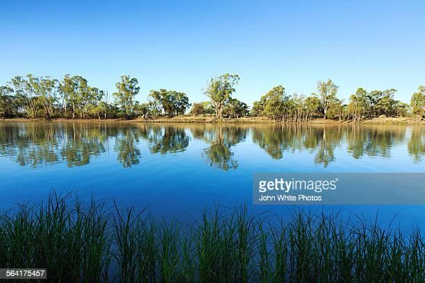 River gum trees on the Murray river. Australia.