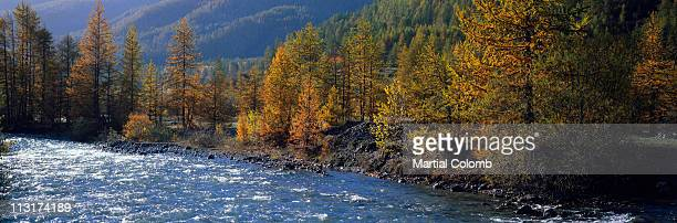 river in autumn in the alps - martial stock pictures, royalty-free photos & images