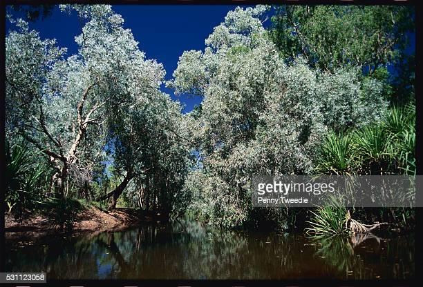 river in dry season - アーネム ストックフォトと画像