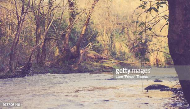 River in forest, Carmarthenshire, Wales, UK