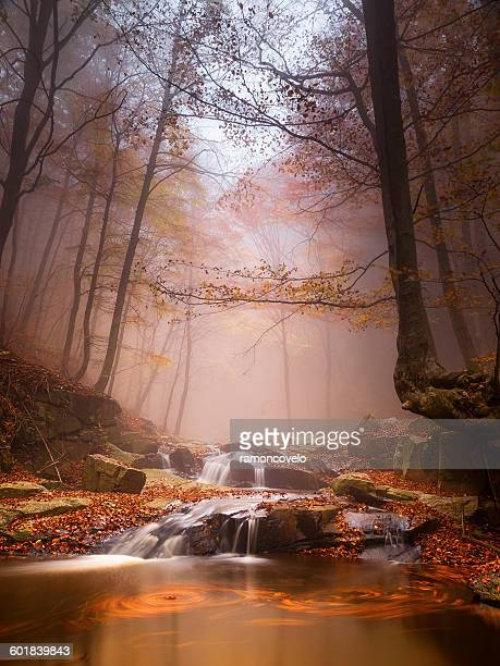 River in forest, Montseny, Barcelona, Spain