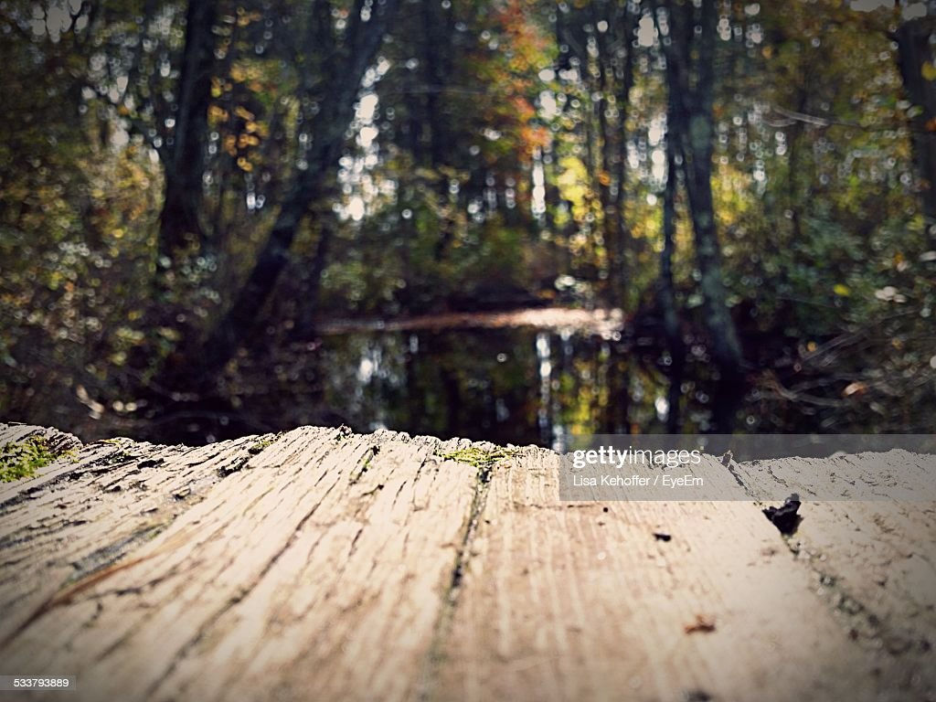 River In Forest : Foto stock