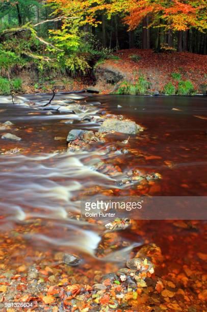 River in Hamsterley Forest, Hamsterley, Bedburn Beck, County Durham, England, UK