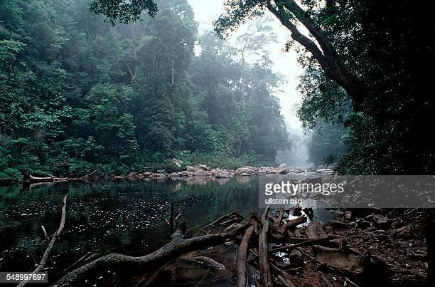 river in rainforest Malaysia Taman Negara National Park