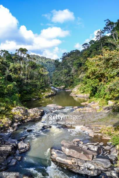 river in ranomafana national park - ranomafana national park stock photos and pictures